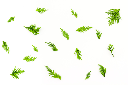 Juniper background. Juniper branches on white background top view. 스톡 콘텐츠