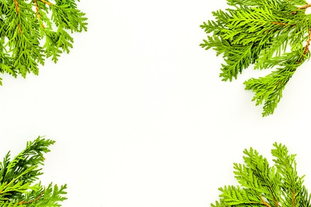 Frame or background with juniper for image editing, image design. Juniper branch on white background top view copy space