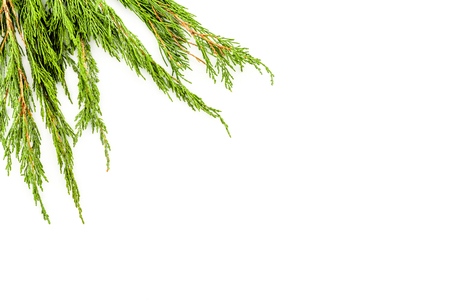 Frame or background with juniper for image editing, image design. Juniper branch on white background top view. Zdjęcie Seryjne