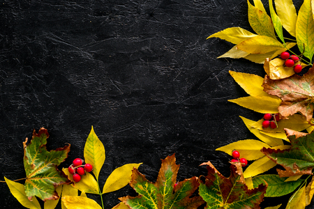 Mockup with bright autumn leaves and berries. Yellow and green leaves, red berries on black background top view copy space