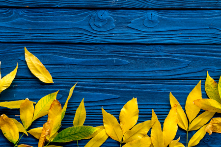 Autumn colors concept. Mockup with yellow leaves on blue wooden background top view. Фото со стока