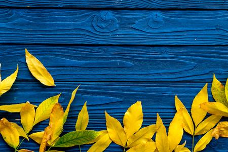 Koncepcja kolory jesieni. Makieta z żółtymi liśćmi na niebieskim tle drewnianych widok z góry.