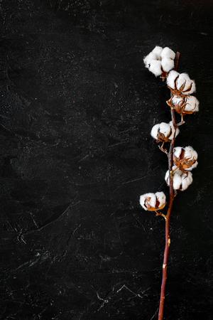 Branch of cotton on black background top view. Reklamní fotografie