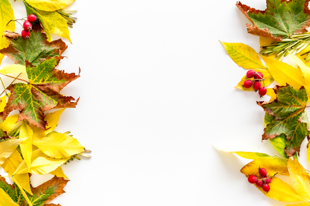 Mockup with bright autumn leaves and berries. Yellow and green leaves, red berries on white background top view copy space
