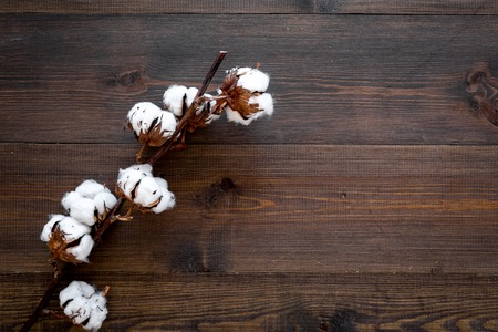 White dried flowers of cotton on dark wooden background top view.