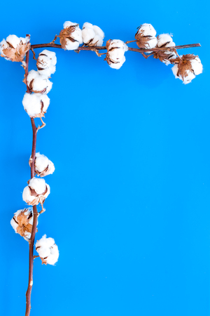 Cotton source. Collect cotton concept. Cotton plant with white flowers, natural view on blue background top view. Stockfoto