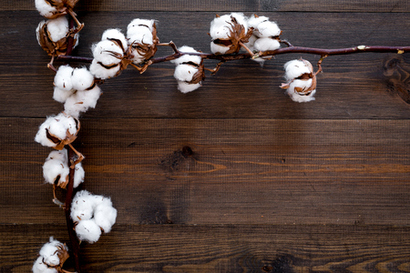Branch of cotton on dark wooden background top view. Stock Photo