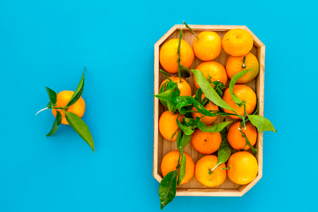 branch of mandarins for New Year and Christmas celebration on blue background top view