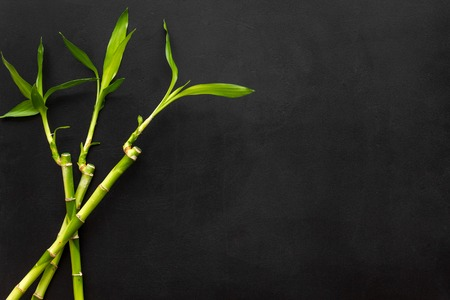 Bamboo shoot. Bamboo stem and leaves on black background top view space for text Imagens