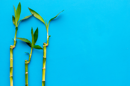 Bamboo shoot. Bamboo stem and leaves on blue background top view copy space