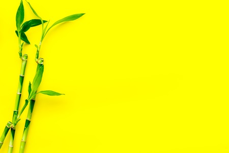 Asia background. Chinese, japanese background. Bamboo branch on yellow background top view copy space
