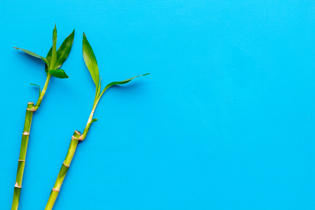 Bamboo shoot. Bamboo stem and leaves on blue background top view.