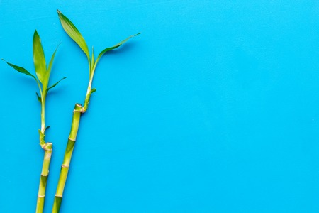 Asia background. Chinese, Japanese background. Bamboo branch on blue background top view copy space Imagens