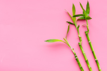 Bamboo background. Bamboo sprouts on pink background top view.