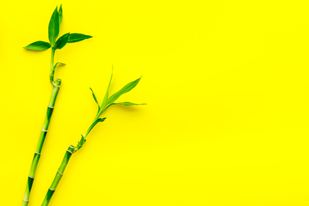 Asia background. Chinese, Japanese background. Bamboo branch on yellow background top view.