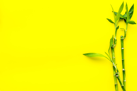 Bamboo background. Bamboo sprouts on yellow background top view space for text