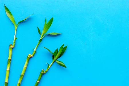 Bamboo shoot. Bamboo stem and leaves on blue background top view space for text