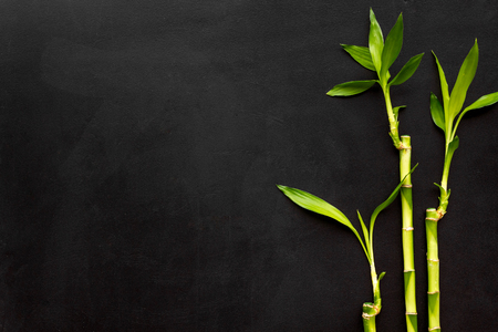 Asia background. Chinese, Japanese background. Bamboo branch on black background top view.
