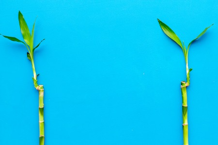 Asia background. Chinese, japanese background. Bamboo branch on blue background top view.