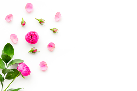 Rose flowers background. Rose roses on white background top view space for text border