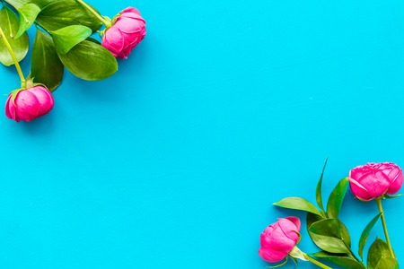 Rose flowers background. Rose roses on blue background top view. Stock Photo