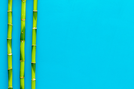 Asian background. Green bamboo branches on blue background top view copy space Reklamní fotografie
