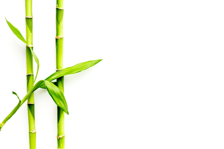Asian background. Green bamboo branches on white wooden background top view space for text
