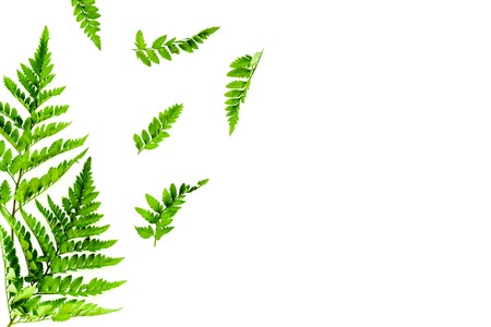 Fern leaves on white background top view border space for text. Spring background Stok Fotoğraf