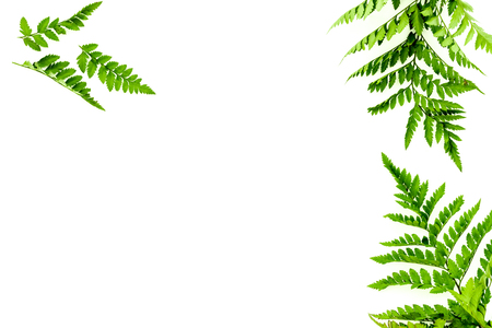 Fern leaves on white background top view border copy space. Spring background Stok Fotoğraf