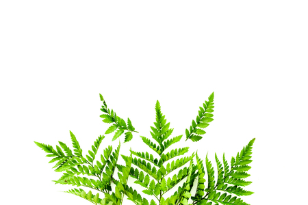 Fern leaves on white background top view border space for text. Spring background Zdjęcie Seryjne