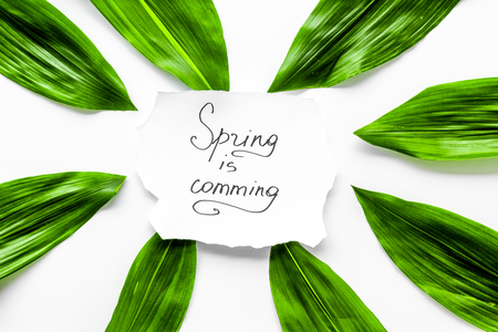 Spring concept. Hand lettering text spring is coming near green leaves on white background top view