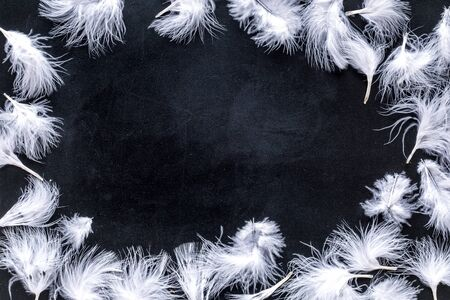 Abstract pattern with bright bird feathers frame on black background top view space for text.