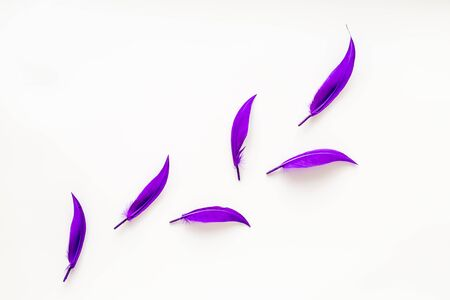 Colorful feathers pattern on white background top view copyspace.