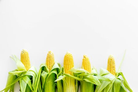 Corn on cobs on white background top view copy space 스톡 콘텐츠