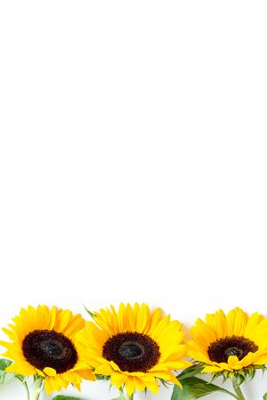 Beautiful yellow sunflowers on white background top view mock up.