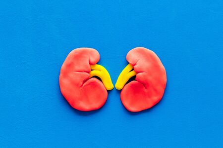 Kidney healthy. Organ on blue background top view.
