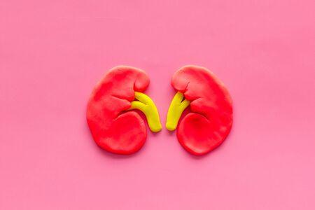 Kidney healthy. Organ on pink background top view 写真素材