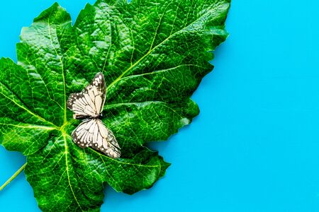 Butterflies on huge tropical leaves on blue background top-down copy space
