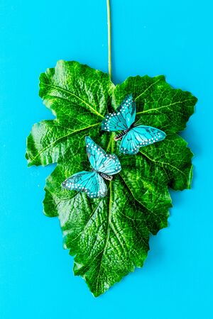Butterflies on huge tropical leaves on blue background top-down.