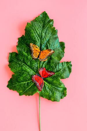 Butterflies on huge tropical leaves on pink background top-down