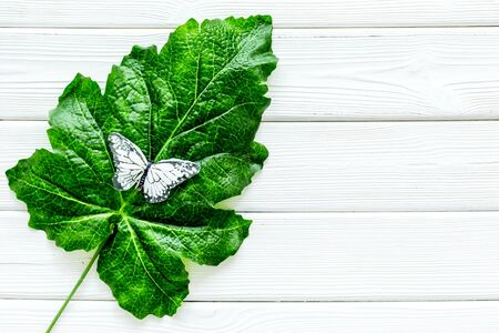 Butterflies on huge tropical leaves on white wooden background top-down copy space