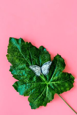 Butterflies on huge tropical leaves on pink background top-down copy space