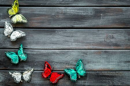 Butterfly - colorful and bright set - on dark wooden background top-down frame copy space