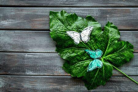 Butterflies on huge tropical leaves on dark wooden background top-down copy space