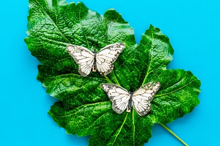 Butterflies on huge tropical leaves on blue background top-down Imagens
