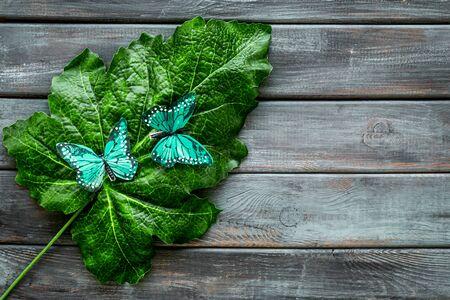 Butterflies on huge tropical leaves on dark wooden background top-down.