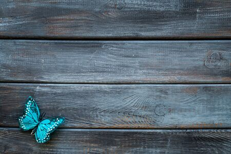 Beautiful tropical butterfly on dark wooden background top-down copy space