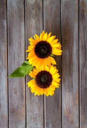 Słoneczniki - dwa kwiaty i liść - na ciemnym drewnianym tle z góry na dół.