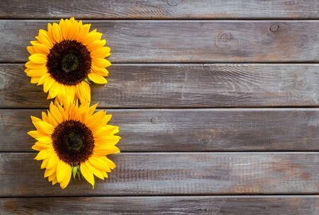 Słoneczniki - dwa kwiaty - na ciemnym drewnianym tle z góry na dół.