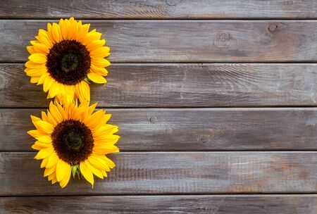 Sunflowers - two flowers - on dark wooden background top-down.